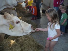 koeien koek geven 006